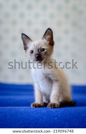 Kitty Beni - stock photo