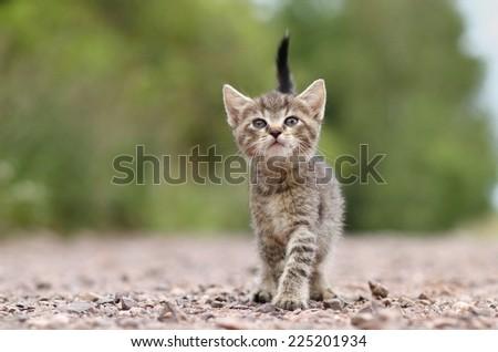 Kitty on path - stock photo