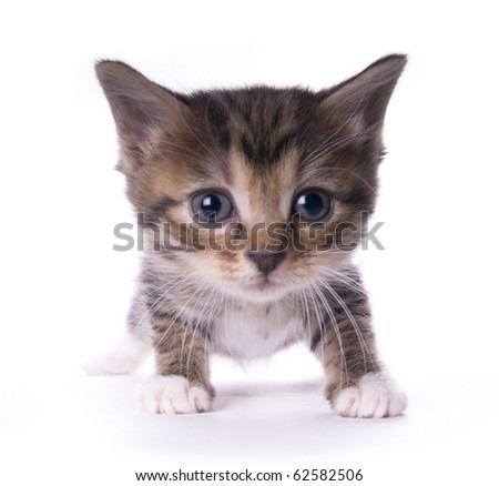 Kitty on the white isolated background - stock photo