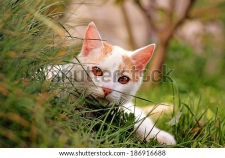 Kitty playing game - stock photo
