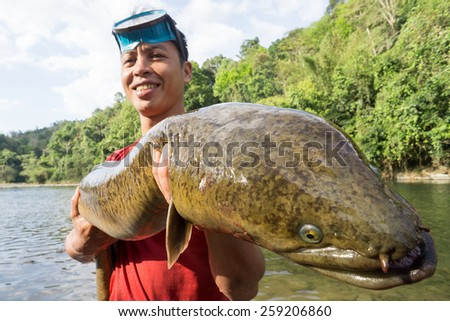 "Kiulu, Sabah Malaysia - March 9, 2015. Unidentified man showing giant freshwater eel or locally known as  ""Sinsilog"" during fish harvesting season at Tuaran River on March 9, 2015. - stock photo"