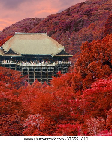 Kiyomizu-dera wooden temple seen from distance tucked in forest with brilliant leaves of autumn colors with crowds of foreign tourist visitors during sunset at evening in Kyoto, Japan