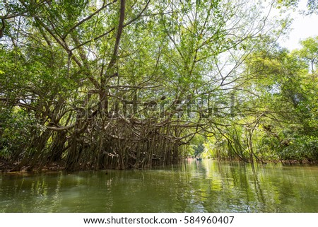 Klong Sung Nae, as known as Little Amazon Takuapa, is a canal full of Banyan tree jungle, Located in Phang Nga province, Thailand
