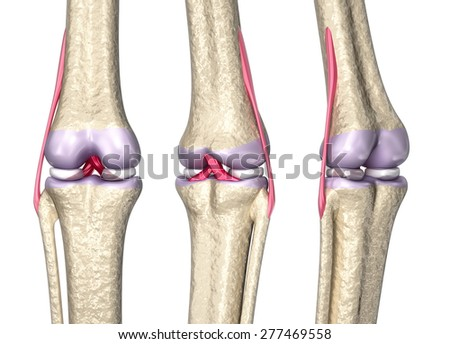 Knee joint anatomy, 3D model - stock photo