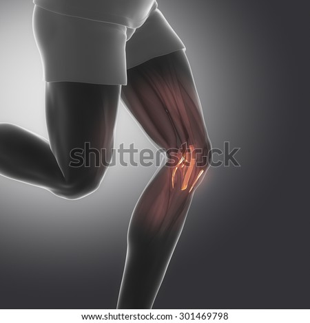 knee ligaments  - human connective tissue anatomy - stock photo