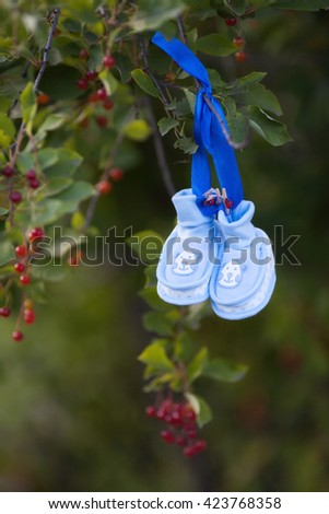 Knitted baby's bootees on tree - stock photo