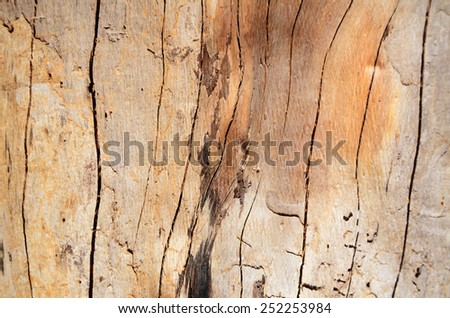 Knot wood Background