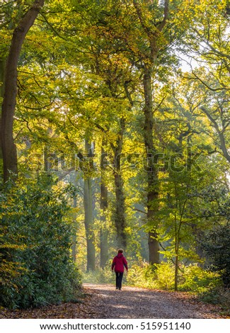 Knutsford, Cheshire, UK. November 11th 2016. Morning walker through woods at Tatton Park, Knutsford, Cheshire, UK