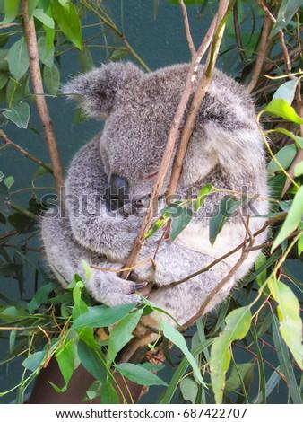 Bear Hugging Tree Stock Images