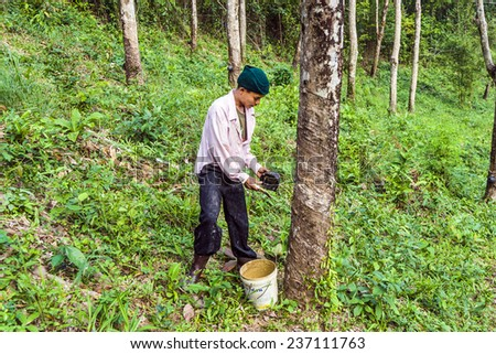 KOH CHANG, THAILAND - JAN 4, 2008: worker at rubber tree plantation in Koh Chang, Thailand. The rubber plantation industry started at the island in 1899 and is still an important industry.