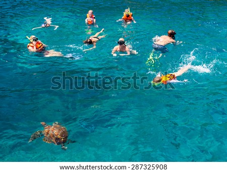 KOH SIMILAN, THAILAND - MARCH 7: Tourists snorkling at Similan Koh Similan No.8 Island in Similan national park with famous similan's turtles, Thailand, on March 7, 2014.   - stock photo