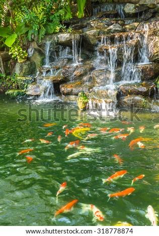 koi carp fishes in the pond of Phuket Botanical Garden at Phuket island Thailand - stock photo