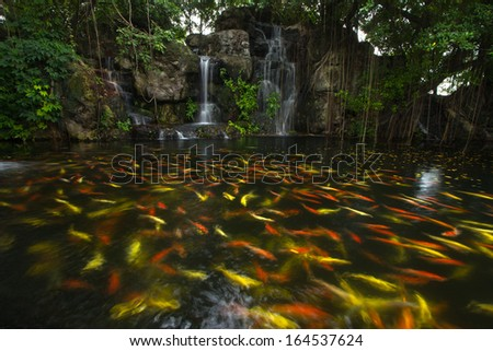 Koi fish in pond at the garden with a waterfall  - stock photo
