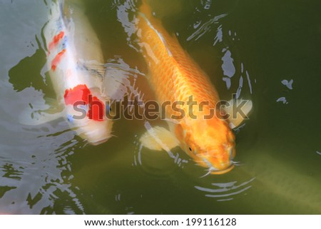 Shrimp on plastic bag stock photo 424969186 shutterstock for Koi carp pond depth
