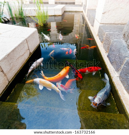 Koi pond japan colorful carps stock photo 163732166 for Koi pond japan