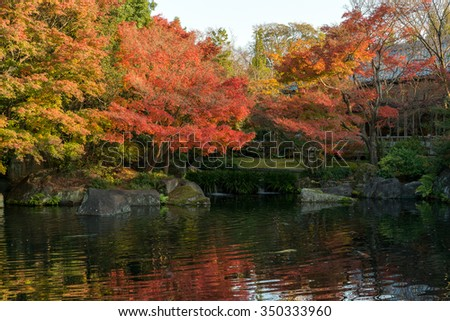 Koko-en Garden is a Japanese garden in Autumn Red Maple Leaf Foliage located next to Himeji Castle in Hyogo Prefecture, Japan. Japanese style pond with Koi, Stone Bridge