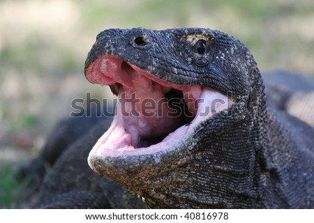 Dragon eating tail stock images royalty free images for Komodo dragon tattoo