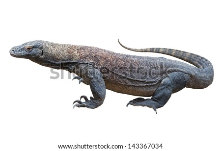 Komodo dragon (Varanus komodoensis), also known as the Komodo monitor, a large species of lizard found in the Indonesian islands of Komodo, Rinca, Flores, GiliMotang and Padar. - stock photo