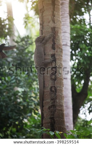 Komodo monitor lizard on palm tree
