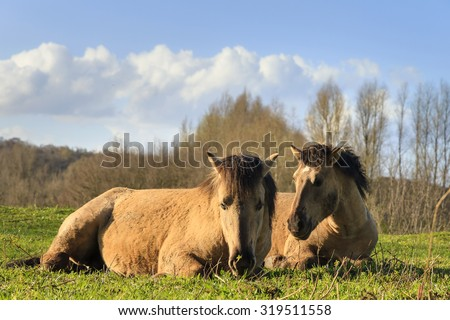 Sunset horses stock photo 97652783 shutterstock - Blauwe kamer ...