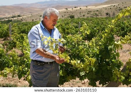 KONYA, TURKEY - JULY 02: Turkish farmer in grape field on July 02, 2008 in Konya, Turkey.  - stock photo