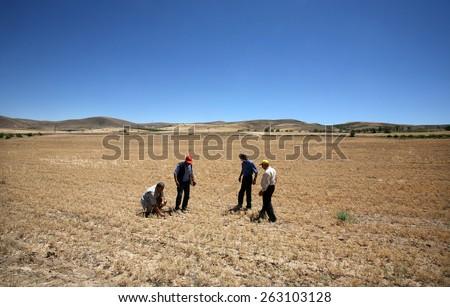KONYA, TURKEY - JULY 02: Turkish farmers in drought field on July 02, 2008 in Konya, Turkey.  - stock photo