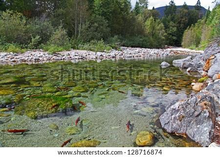 Kootenay River - stock photo