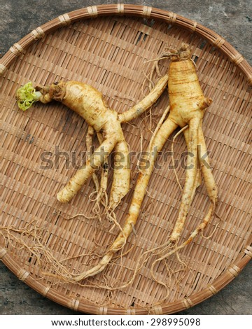 Korean ginseng on bamboo weave background. - stock photo