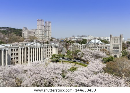 Korean University campus with cherry trees are in full blooms - stock photo
