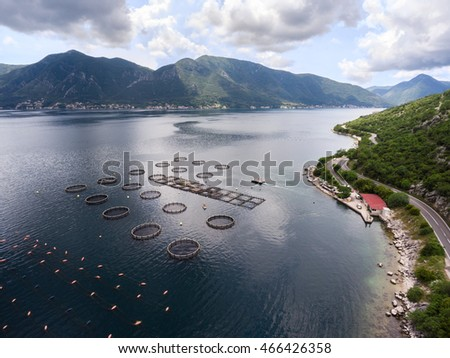 Kotor bay (Boka Kotorska) with coastal road and fish farm for feeding and growing. Perast, Montenegro