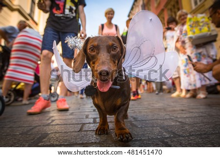 KRAKOW, POLAND - FEB 11, 2016: Dog party in the annual 22nd Dachshund Parade (Marsz Jamnikow) on the Main Market Square. Parade costumed sausage dogs through Cracow has hosted every autumn since 1994.