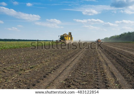 KRASNODAR REGION, RUSSIA - AUG 19, 2015: Yellow harvester harvests sugar beet at field, In 2015 in Krasnodar region yields reached record level - 58.4 centners per hectare