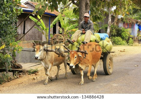 KRATIE, CAMBODIA-DECEMBER 6: An unidentified man rides ox cart on December 6, 2011 in Kratie, Cambodia. Oxen are still the most popular power source for land preparation and transportation in Cambodia - stock photo