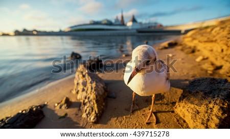 Kremlin in Kazan town the capital of Tatarstan republic. Russia - stock photo