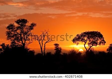 Kruger national park - stock photo