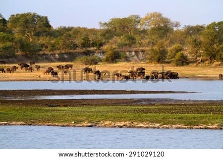 kruger park landscape - stock photo