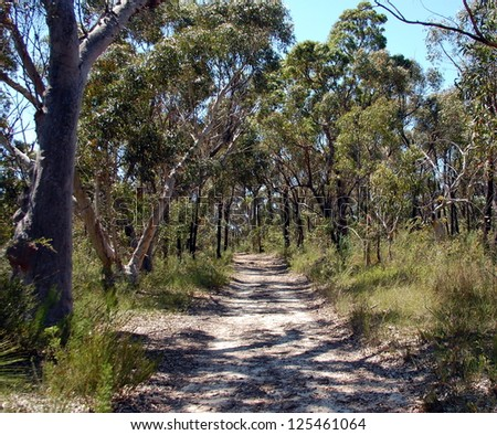 Ku-ring-gai Chase National Park. Mont Kuring-gai track. Tracking in Australia, New South Wales. - stock photo