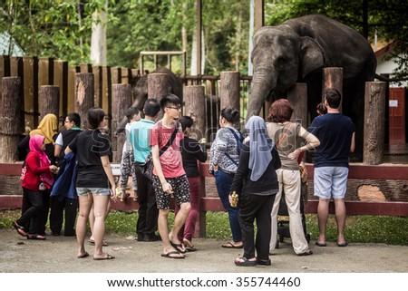 KUALA GANDAH, MALAYSIA - DECEMBER 25, 2015: Tourists are feeding an elephant at Kuala Gandah Elephant Conservation Centre.  - stock photo