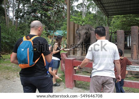 Kuala Gandah, Malaysia - December 28, 2016: Tourists feeding elephants. The Kuala Gandah Elephant Conservation Centre is an elephant sanctuary located in Temerloh in the state of Pahang, Malaysia
