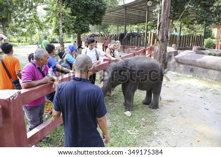 KUALA GANDAH, MALAYSIA - 2015 NOVEMBER 5 :Tourist play with baby elephant in showing presentation.Elephant Orphanage Sanctuary in Kuala Gandah. Baby elephant calf rescued after mother's death.  - stock photo