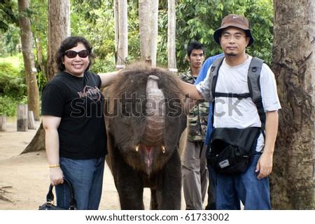KUALA GANDAH, MALAYSIA - SEPTEMBER 25 : A couple posed with a baby elephant at Kuala Gandah Elephant Orphanage Sanctuary during Elephant Awareness Program September 25 2010 in Kuala Gandah, Malaysia. - stock photo
