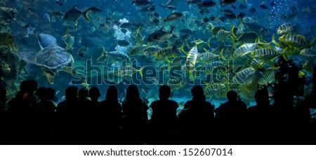 KUALA LUMPUR, MALAYSIA-AUG.19:A general view spectators watch fish feeding in AQUARIA aquarium in Kuala Lumpur, Malaysia on August 19, 2013. - stock photo