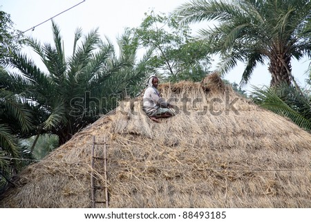 KUMROKHALI, INDIA - JANUARY 12: After the rice harvest, repairing the thatched roofs in Kumrokhali, West Bengal, India January 12, 2009. In Bengal rural houses are made mostly of mud and straw.