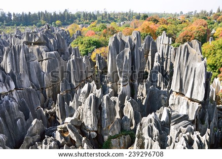 KUNMING, CHINA  DECEMBER 1, 2014: Stone Forest is a set of karst formations caused by the dissolution of limestone and are believed to be over 270 million years old. - stock photo