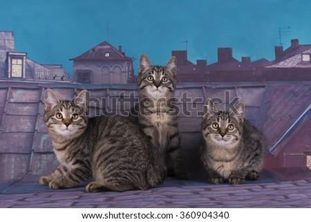 Kuril Bobtail kitten on the roof at night - stock photo