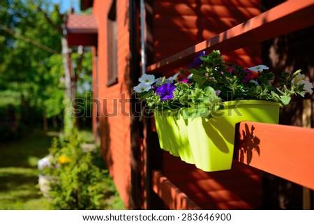kwiaty w ogrodzie, lato, wiosna - stock photo