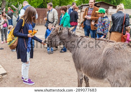 Kyiv - May 17: Zoo visitor feeds a donkey in a zoo, May 17, 2015, Kyiv, Ukraine