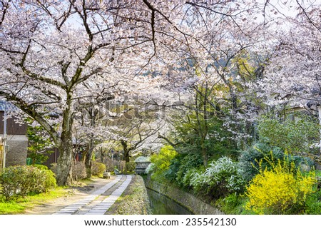 Kyoto, Japan at Philosopher's Walk in the Springtime. - stock photo