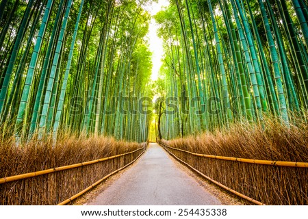 Kyoto, Japan at the bamboo forest. - stock photo