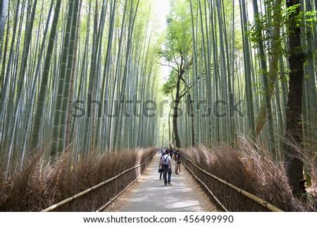 KYOTO,JAPAN- MAY 24, 2016:Bamboo grove, bamboo forest at Arashiyama, Kyoto, Japan   - stock photo